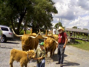 Oxen & baby-1
